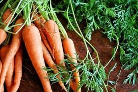 Листа от моркови за много заболявания