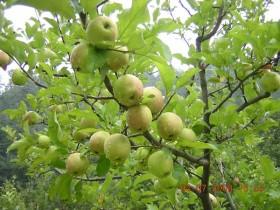Диета с ябълки