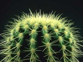kaktus_09